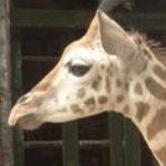 Profile picture of Kazob79