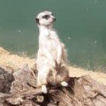 Profile picture of Mum247
